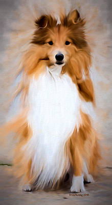 Photograph - Shetland Sheepdog - Sheltie by Ericamaxine Price