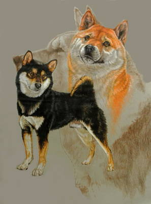 Sporting Mixed Media - Shiba Inu With Ghost by Barbara Keith