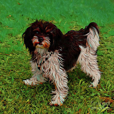 Photograph - Shih Tzu 17818 by Ray Shrewsberry