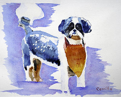 Ruben Carrillo Wall Art - Painting - Shih Tzu Blue by Ruben Carrillo