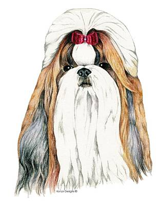 Christmas Drawing - Shih Tzu, Gold And White by Kathleen Sepulveda