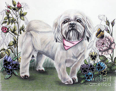 Drawing - Shih Tzu In Color by Lena Auxier