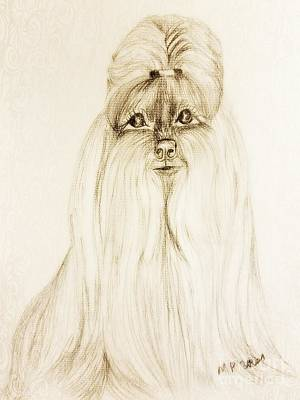 Drawing - Shih Tzu by Maria Urso