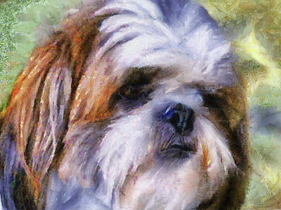 Small Dogs Painting - Shih Tzu Portrait by Jai Johnson