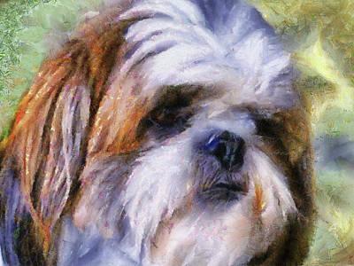 Shih Tzu Portrait Art Print