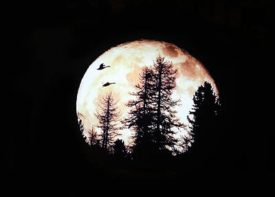 Silhouettes Om Full Moon Original by Linda Phelps