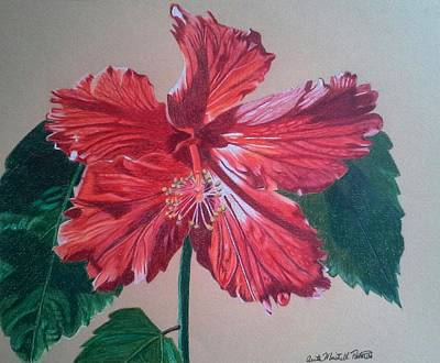 Drawing - Shimmer - Red Hibiscus by Anita Putman