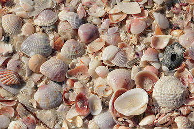 Photograph - Shimmering Beach Seashells by Carol Groenen