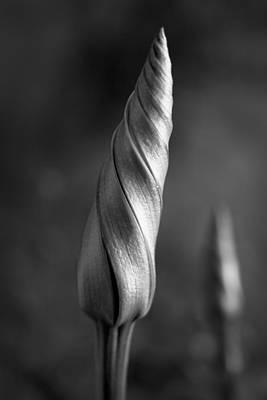 Shimmering Moonflower Bud Art Print