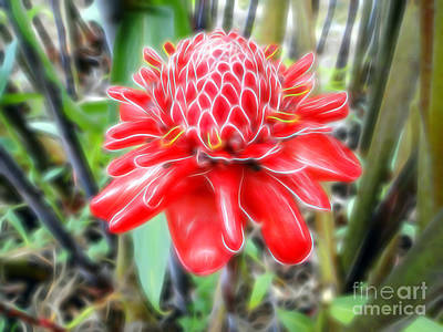Photograph - Shimmering Red Ginger Lily by Sue Melvin