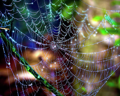Photograph - Shimmering Silk by Mark Andrew Thomas