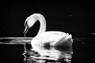 Photograph - Shimmering Swan by Michael McStamp