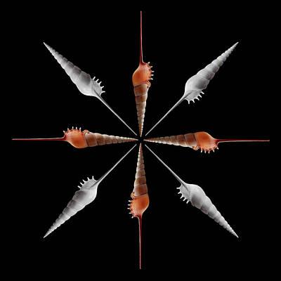 Photograph - Shinbone Tibia Geometric by Gary Cloud