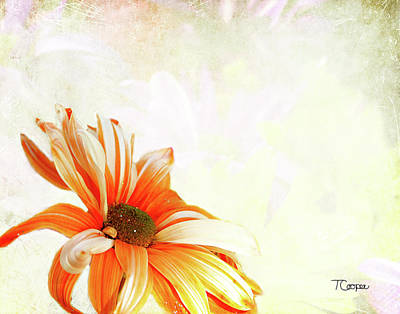 Photograph - Shine 2 by Tonya Cooper