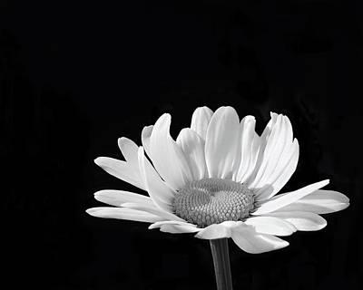 Photograph - Shine A Light by Kathi Mirto