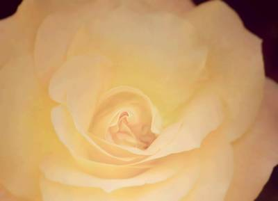 Unique Photograph - Shine Beautifully by The Art Of Marilyn Ridoutt-Greene