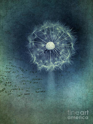 Teal Flowers Photograph - Shine by Priska Wettstein