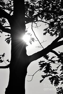 Photograph - Shine Through by Traci Cottingham