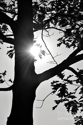 Photograph - Shine Through by Traci Cottingham