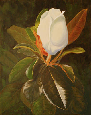 Painting - Shining Magnolia by Sandy Murphree Jacobs
