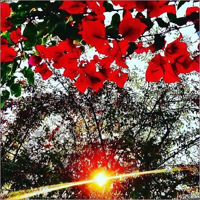Photograph - Shining Redding  by Simenona Martinez