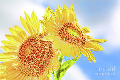 Photograph - Shining Sunflowers by Diana Raquel Sainz