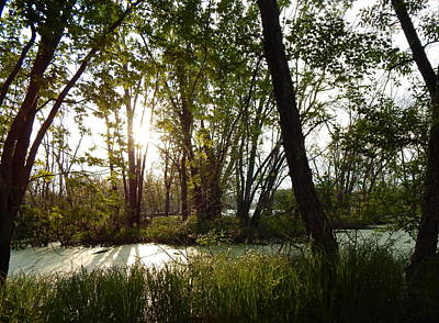 Dross Photograph - Shining Swamp by Wild Thing