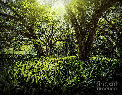 Photograph - Shining Through   by Ken Frischkorn