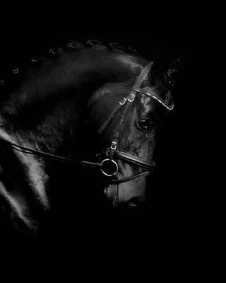 Animals Photos - Shiny Black Horse by Perry Correll