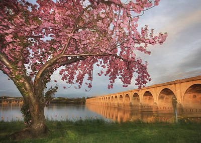 Harrisburg Photograph - Shipoke In Spring by Lori Deiter