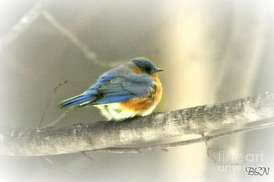 Photograph - Shivering by Barbara S Nickerson