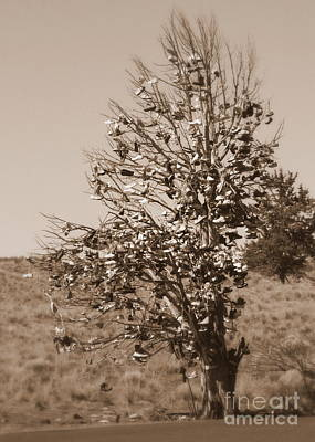 Photograph - Shoe Tree In Sepia by Carol Groenen