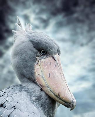 Rex Photograph - Shoebill by Wim Lanclus