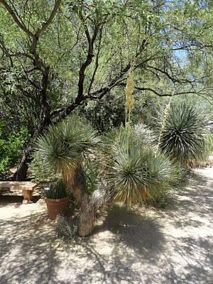 Photograph - Shooting Up Cactus Garden by Mozelle Beigel Martin