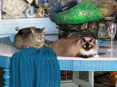 Photograph - Shop Cats by Keith Stokes