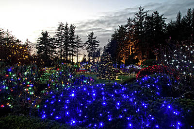 Photograph - Shore Acres Xmas Lights Two by Thom Zehrfeld