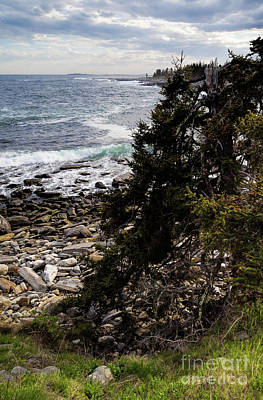 Photograph - Shore And Battered Tree, Pemaquid Point, Bristol, Maine  -60084 by John Bald