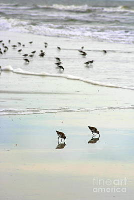 Beach Theme Decorating Photograph - Plundering Plover Series 7 by Angela Rath