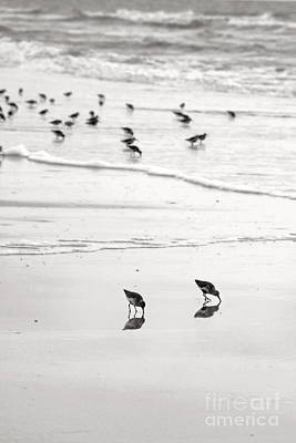 Beach Theme Decorating Photograph - Plundering Plover Series In Black And White 7 by Angela Rath