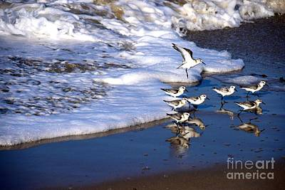 Photograph - Shore Birds Foam  by Johanne Peale