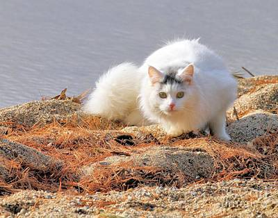 Photograph - Shore Kitty by Debbie Stahre