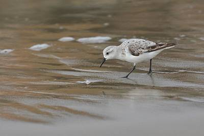 Sandpiper Photograph - Shore Pickings by Fraida Gutovich