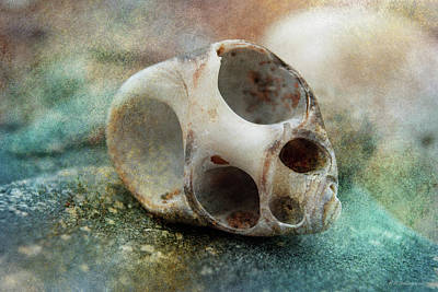 Photograph - Shore Shell 4 by WB Johnston
