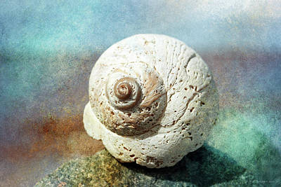 Photograph - Shore Shell by WB Johnston