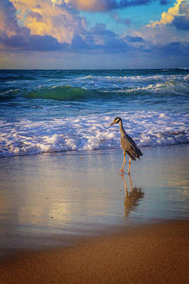 Photograph - Shorebird by Debra and Dave Vanderlaan