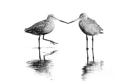 Photograph - Shorebird Greeting by Sonya Lang