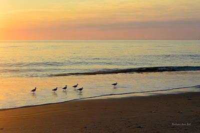 Photograph - Shorebirds 9/4/17 by Barbara Ann Bell
