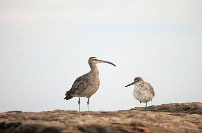 Shorebirds Of Windansea Beach Art Print
