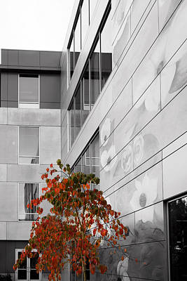 Photograph - Shoreline City Hall by Mary Jo Allen