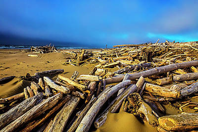 Weatherworn Photograph - Shoreline Full Of Driftwood by Garry Gay